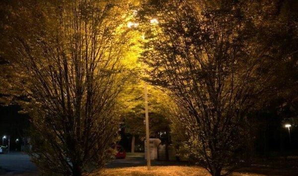esti kép fákról