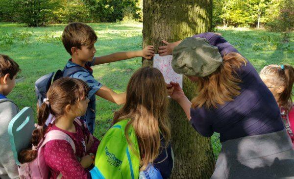 erdei feladat egy fánál