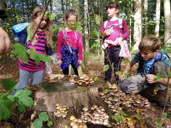 gyerekek az erdőben gombákat figyelve