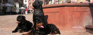 helyi kutyafajta