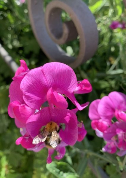 Virág beporzóval